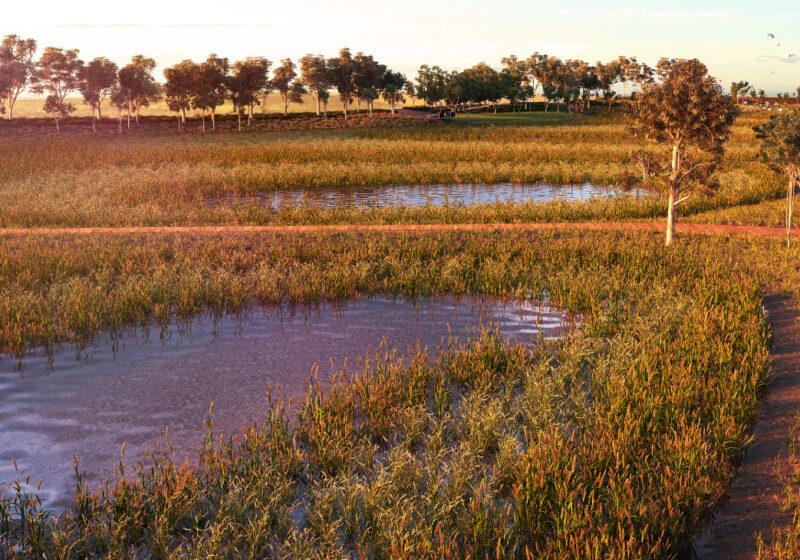 Thornhill Park Wetland, Rockbank
